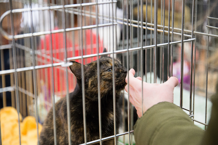 compassionate people handing out homeless cats