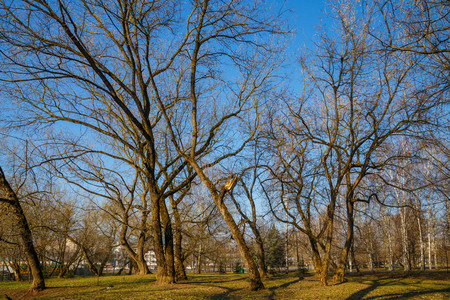 Beautiful park in the center of the city in sunny weather in early spring Stock Photo