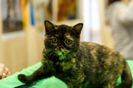 Beautiful young homeless cats are handed out for actions to help homeless animals