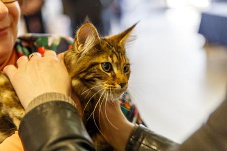 De beaux jeunes chats sans abri sont distribués pour des actions visant à aider les sans-abri