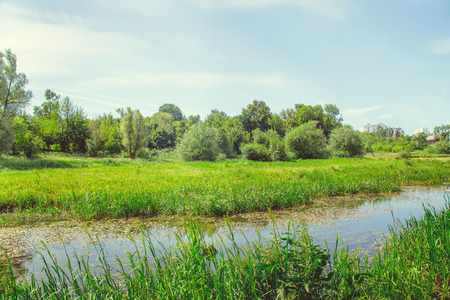River on nature in the countryside in clear sunny weather in summer