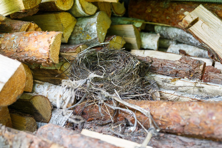 The birds nest lies on a pile of firewood near the barn Stock Photo