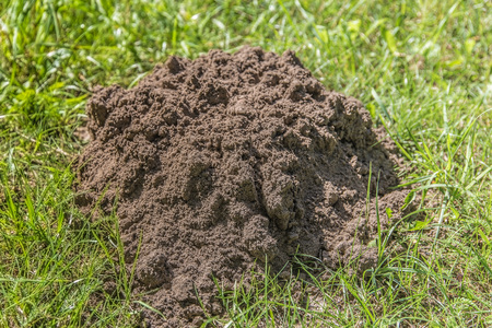 A large hole of a mole in the ground on a field in the summer Imagens