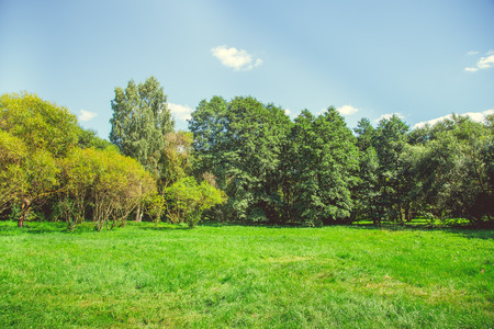 Forest park with a pond in the city center in bright sunny summer weather Stock Photo - 84111601