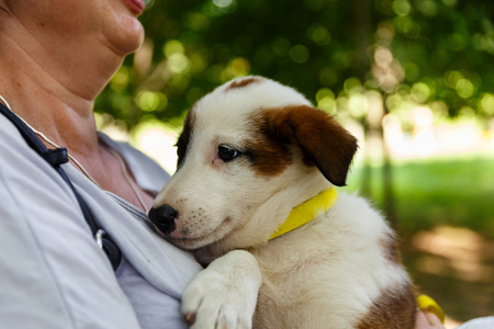 Volunteers distribute homeless dogs to kind-hearted people Stock Photo