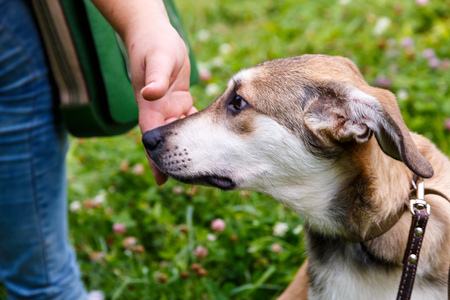 kind hearted: Volunteers distribute homeless dogs to kind-hearted people Stock Photo