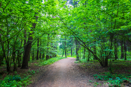 Dark forest road Stock Photo