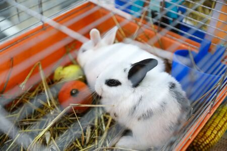 rabbits are sold at a pet store