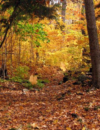 10 월에 단풍 숲에서 화창한 날
