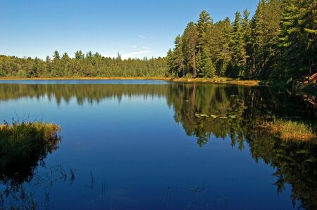 Lake in sunny pine forest in Algonquin Park