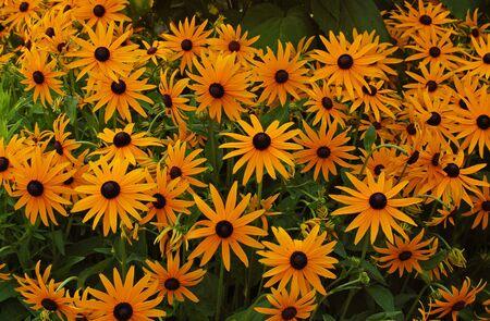 녹색 초원에 camomile 꽃을 많이