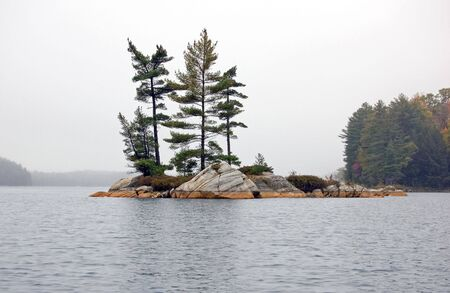 Several spruce trees in the small island