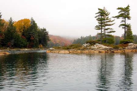 작은 섬에 여러 가지 가문비 나무
