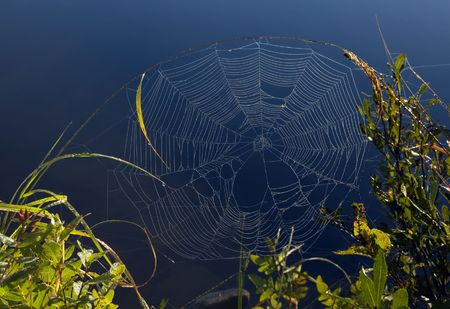 Spinnenweb op hoge blad van gras in Killarney Park
