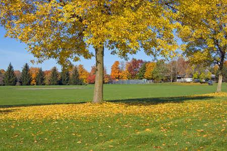 푸른 잔디와 토론토 공원 중 하나에서 다채로운 나무 스톡 콘텐츠