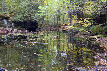 Quiet water in forest pond Stock Photo