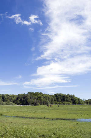 ander: Several horses on green grass ander blue sky Stock Photo