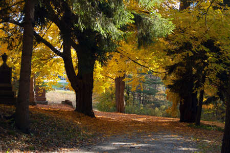 Colorful autumn trees on King city cemetery 免版税图像