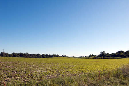 Green field under blue sky near the small willage