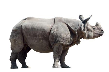 코뿔소는 나무 배경에 쬐인에 unicornis