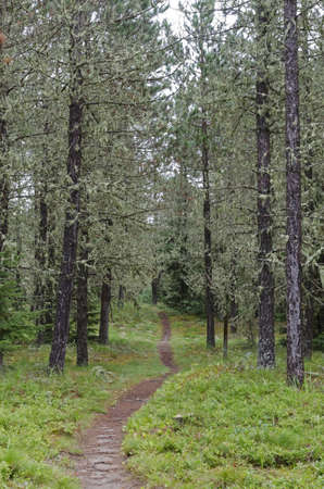 provincial forest parks: Path in sunny forest in Nays Park Stock Photo