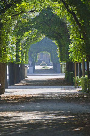 schoenbrunn: Green tree alley (leaves canopy) in Schoenbrunn, Vienna