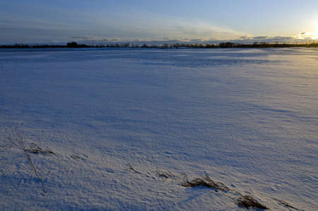 Snow field with dry grass on sunset time. Banco de Imagens