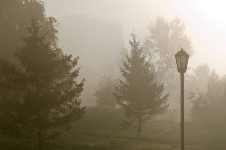 Fog above green grass and trees