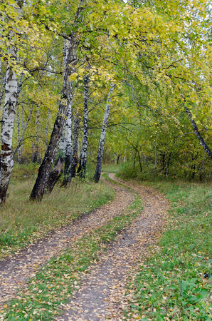 Path in autumn birch forest in overcast day