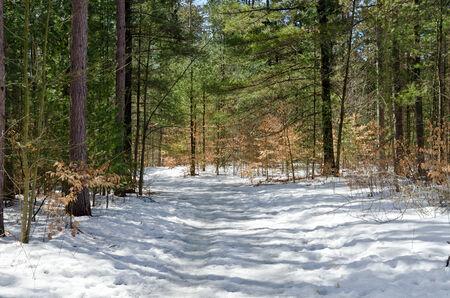 Spruces onder sneeuw en skigebieden in zonnige dag