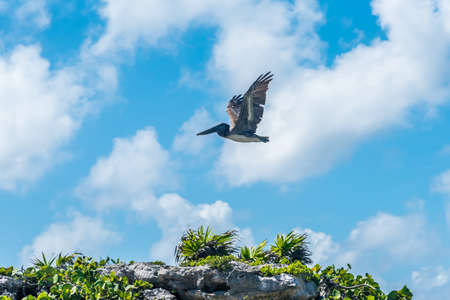 Pelican flying over the ocean shore on sky and clouds background
