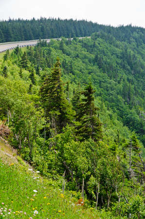 Spruce forest in the Cape Breton Highlands National Park