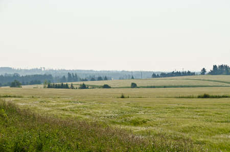 View of fields and forests of Prince Edward Island 免版税图像