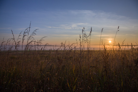 spikelets: spikelets at sunrise