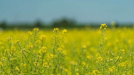 Summer meadows and fields on a Sunny day. High quality photo