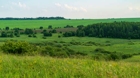 green meadows in summer