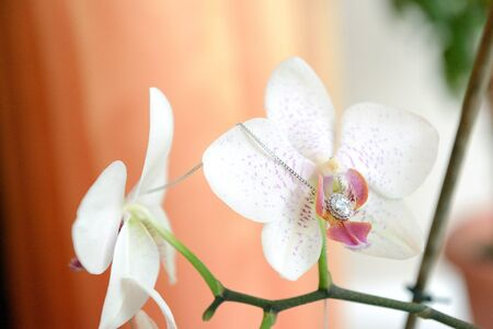neckless: the neckless on the home flower - stock photo