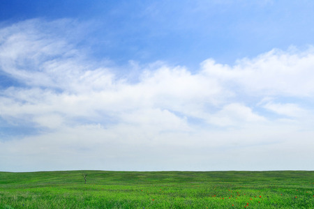 Lonley tree on the green field and cloudy blue sky. Great for pc background Standard-Bild