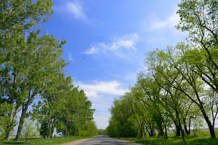 Country road with green trees on the curb Standard-Bild