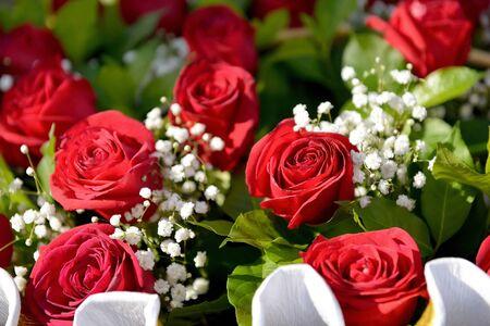 Bouquet of beautiful fresh roses close up Standard-Bild