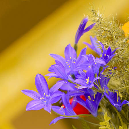 champ de fleurs: Vase with the field flowers, blured background