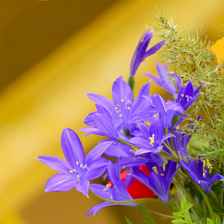 Vase with the field flowers, blured background