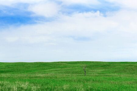 The green field background and cloudy blue sky