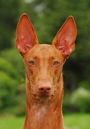 lassie: Dog