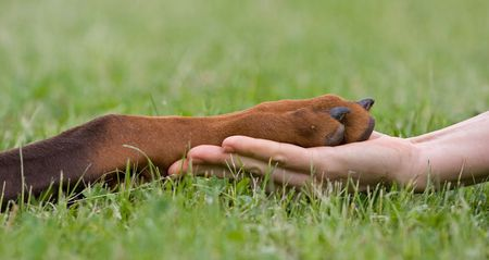 Friendship between human and animal - puppy give woman paw - handshake Banque d'images