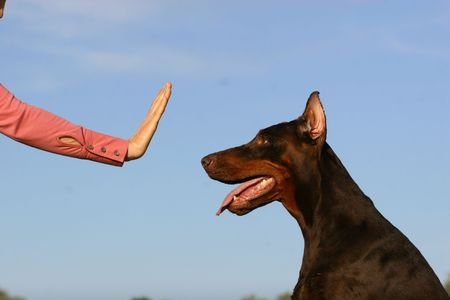 Woman hand showing the stop simbol for dog