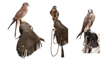 Set  3 falcons on falconers glove