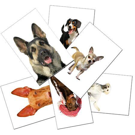 farme: collezione di cani Archivio Fotografico