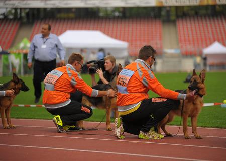 SEP 07, 2014 Nurnberg Biggest german shepherd dog show in Germany. Team Nando vom Welsetal.