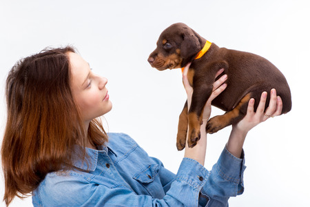 girl friend: Beautiful woman holds red doberman dog puppy on her hands, isolated on white